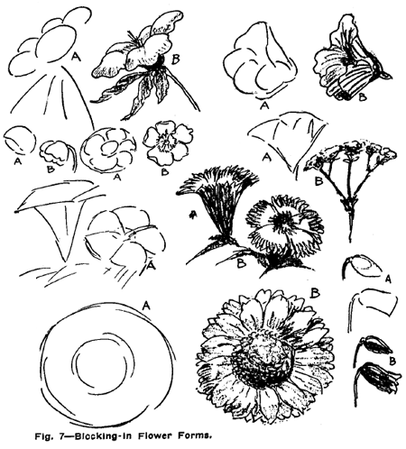 Drawing flowers plants weeds and leaves with drawing for Easy flower drawing tutorials