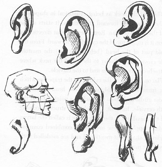 How to Draw Human ears