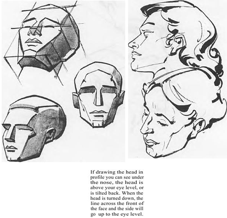 Drawing the human face