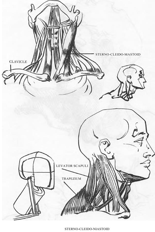 How To Draw Male And Female Necks And Head With Drawing Tutorials