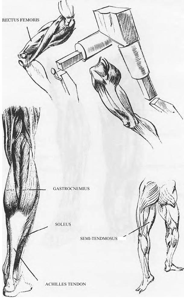 How To Draw Human Legs And Feet Drawing Article How To Draw Step