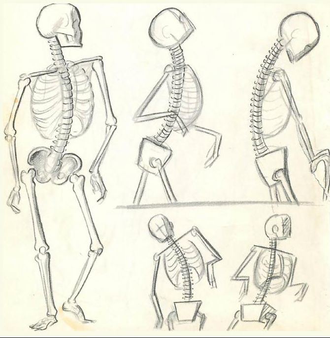 Drawing human anatomy for beginners