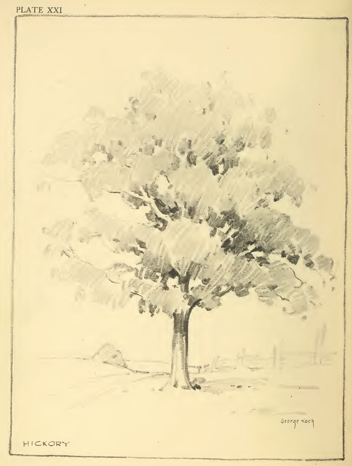 Drawing Foliage, Shrubs, and Trees : How to Draw Foliage ...