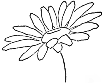 Drawing The Daisy How To Draw Daisies With Easy Step By