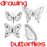 Butterfly Drawing Easy Methods : How to Draw Butterflies Step by Step