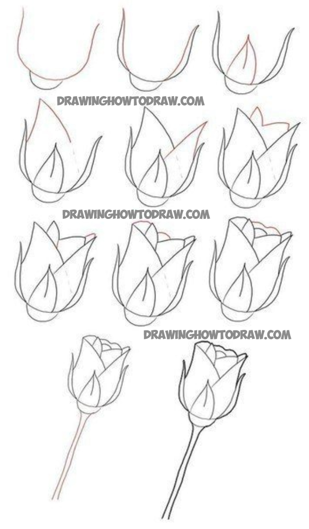 How to Draw Long Stem Roses Drawing Tutorial for ...