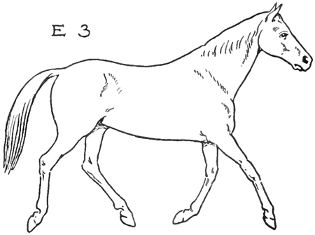 Step 3e How To Draw Horses Running Trotting How To