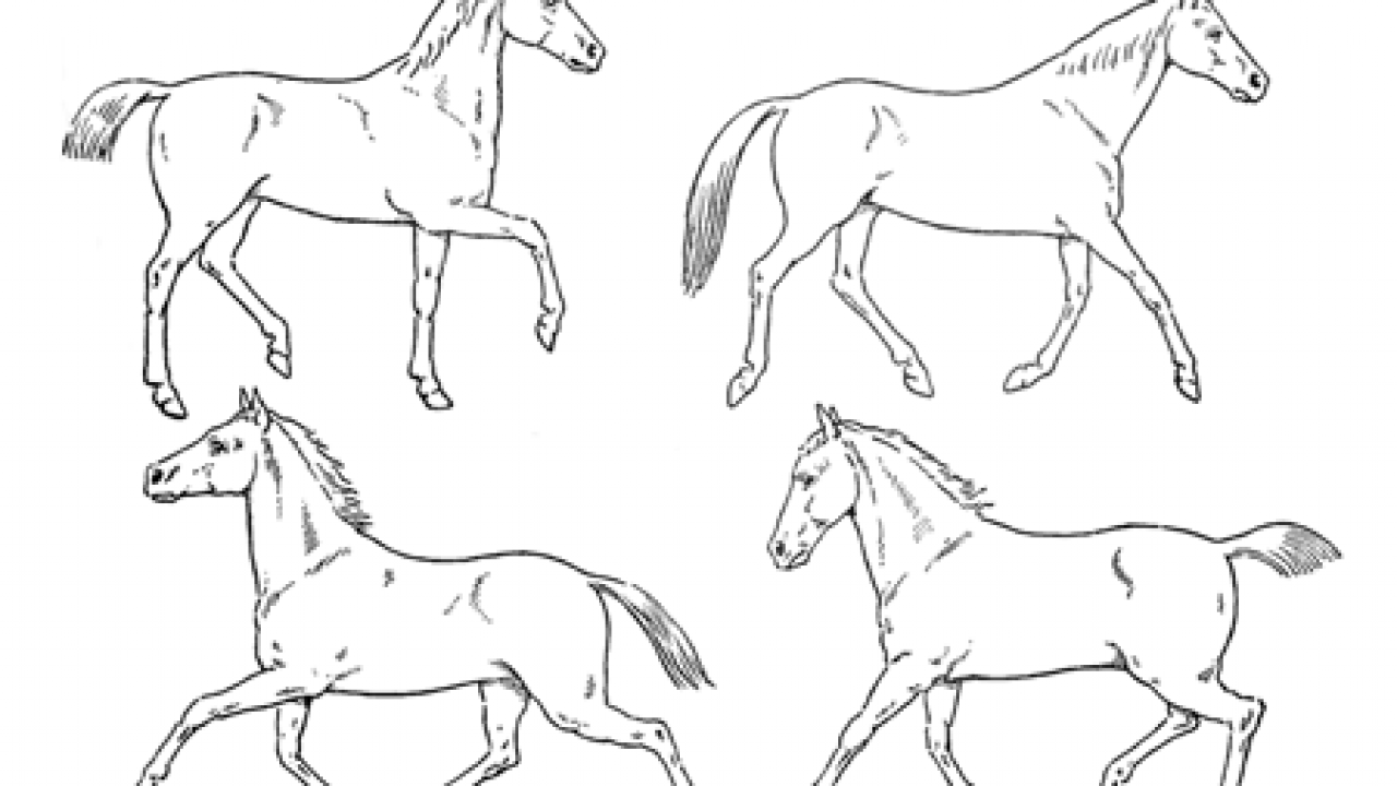 How To Draw Horses With Easy Step By Step Drawing Lessons How To Draw Step By Step Drawing Tutorials