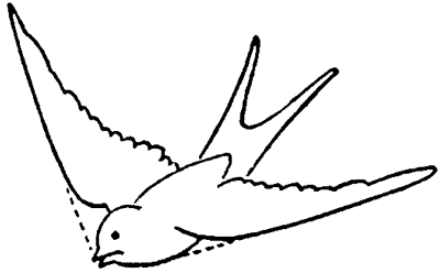 Step 4 Drawing Birds Swallows With Easy Steps Lesson How To Draw