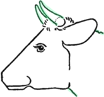 Step 5 Drawing Cow S Face And Head In Steps How To Draw Step By