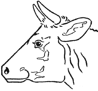 cow side view coloring pages - photo#16