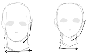 For A Realistic Drawing An Ideal Male Head Often Has A