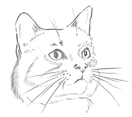 Guide to Drawing Cats & Kittens with Step by Step ...