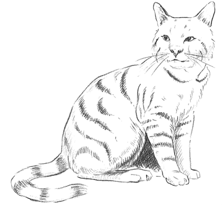 Finished Drawing of Cat Tutorial