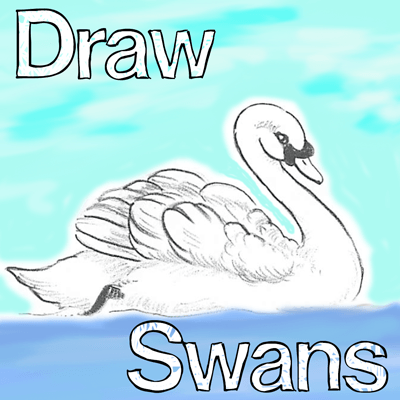 How To Draw Swans Step by Step Lessons