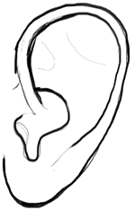 Step 6 : Drawing Ears Step by Step Tutorial