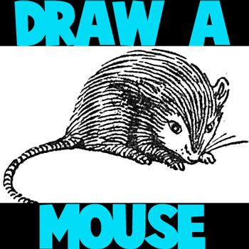 How to Draw a Mouse Step by Step Drawing Tutorial for Kids