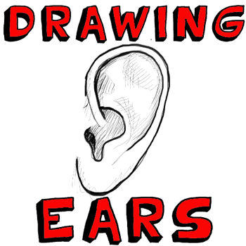 How to draw human ears in profile step by step drawing tutorial how to draw human ears in profile step by step drawing tutorial ccuart Image collections