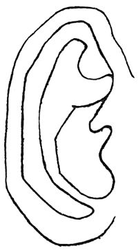 Step 3 How to Draw Ears Step by Step Drawing Tutorial
