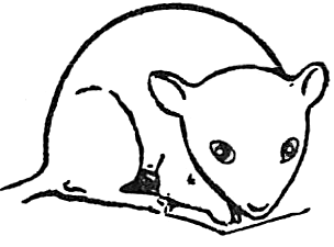 Step 4 : Drawing Mice and Mouse Lessons
