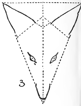 Step 3 : Drawing Foxes Step by Step Lessons