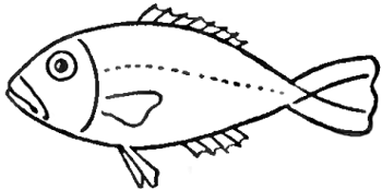 step 4 drawing fish in easy steps