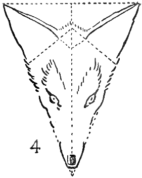 Step 4 : Drawing Foxes Step by Step Lessons