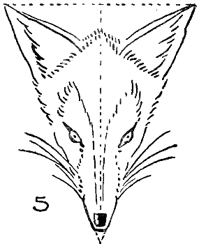 Step 5 : Drawing Foxes Step by Step Lessons