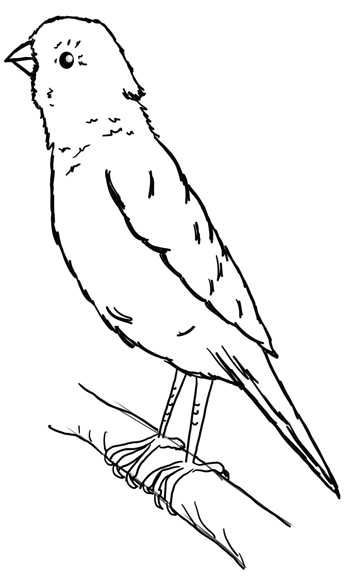 Step 10 : Drawing Yellow Canaries Lesson