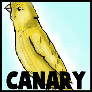 How to Draw a Canary with Step by Step Tutorial to Drawing Canaries