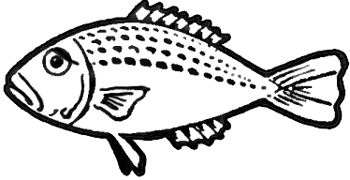How to Draw Fish in Easy to Follow Step by Step Drawing Tutorial