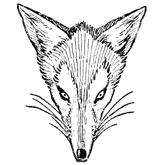 How to Draw Foxes Heads Easy Step by Step Drawing Tutorial