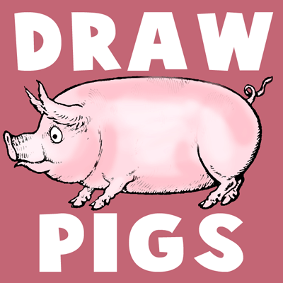 how to draw cartoon hogs and pigs in simple to follow steps