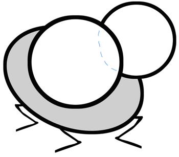 Step 2 : Drawing Cartoon Flies in Easy Steps