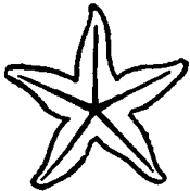 Step 3 : Drawing Starfish in Easy Steps Tutorial