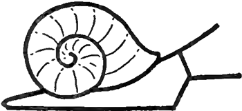 Step 4 : Drawing Cartoon Snails Step by Step Tutorial