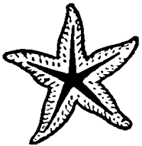 Step 4 : Drawing Starfish in Easy Steps Tutorial