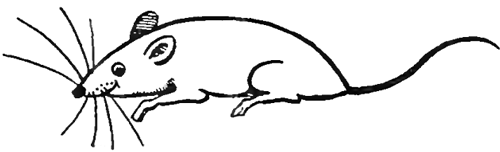 Rats drawing cartoon - photo#14