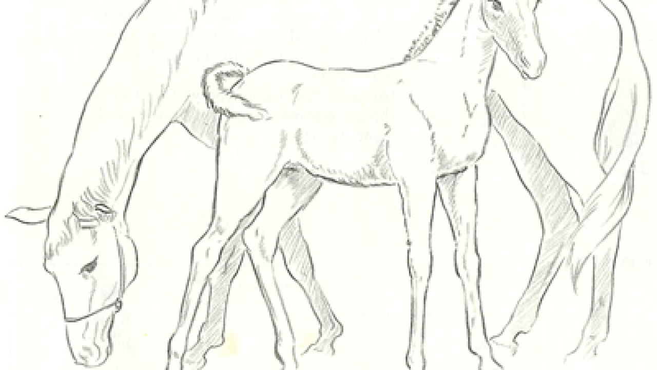 How To Draw Momma And Baby Horse Mare And Foal Drawing Tutorial How To Draw Step By Step Drawing Tutorials