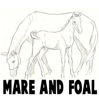 How to Draw Momma and Baby Horse (Mare and Foal) Drawing Tutorial