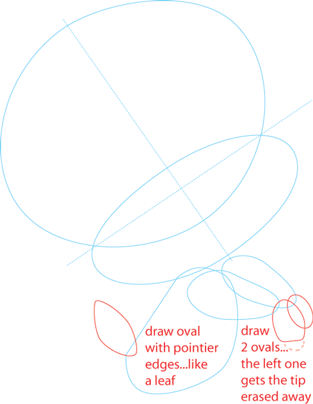 Step 3 : Drawing Baby Tweety Bird from TinyToons Adventures Easy Steps Lesson