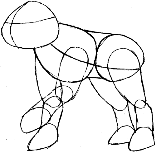 Step 4 : Drawing Raikou from Pokemon Easy Steps Lesson