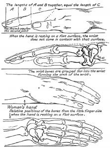 Bones Beneath Hands Skin