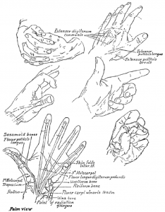Examples of Hands Folded, Pointing Finger and Closed Fists
