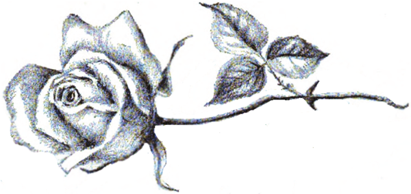 How To Draw A Rose Lying On Its Side