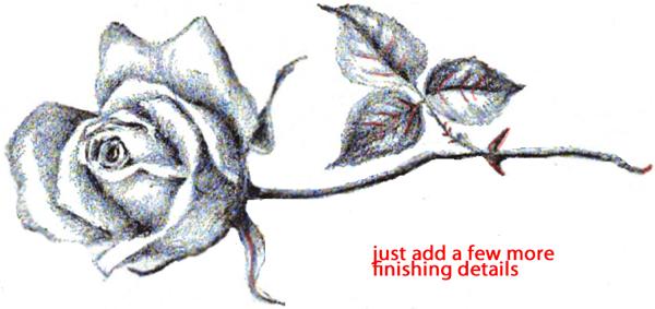Step 10 : Drawing Long Stem Roses Easy Steps Lesson