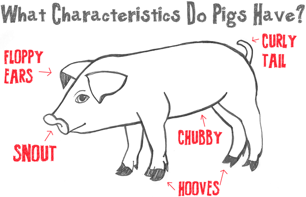 Big Guide to Drawing Cartoon Pigs with Basic Shapes for Kids - How