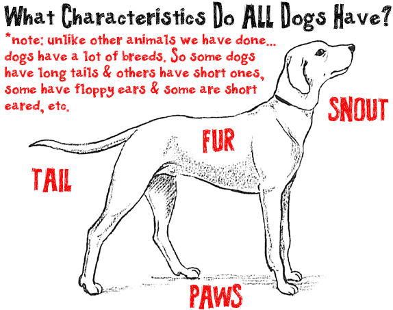 what physical characteristics do all dogs have when drawing a cartoon