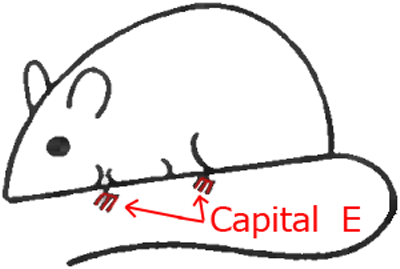 Mouse A - Step 4 : Drawing Cartoon Mice in Easy Steps Lesson