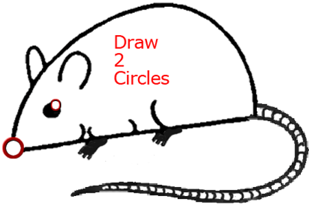 Mouse A - Step 6 : Drawing Cartoon Mice in Easy Steps Lesson